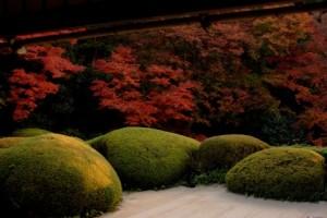 Autumn Leaves 150