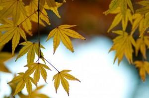 Autumn Leaves 152