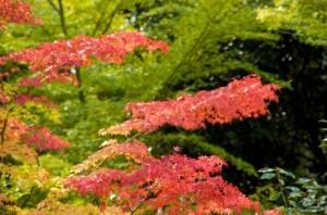 Autumn Leaves 153