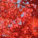 「紅葉を見に行こう」という日常英会話表現